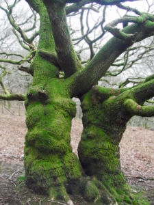 tree soulmates